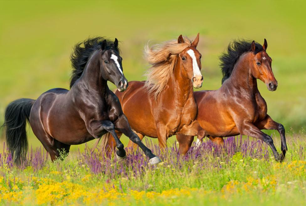 Horse Country Tours