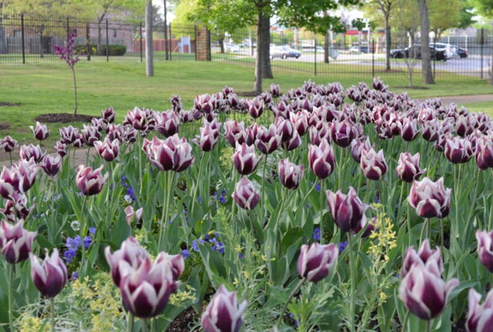 Grapevine Botanical Gardens