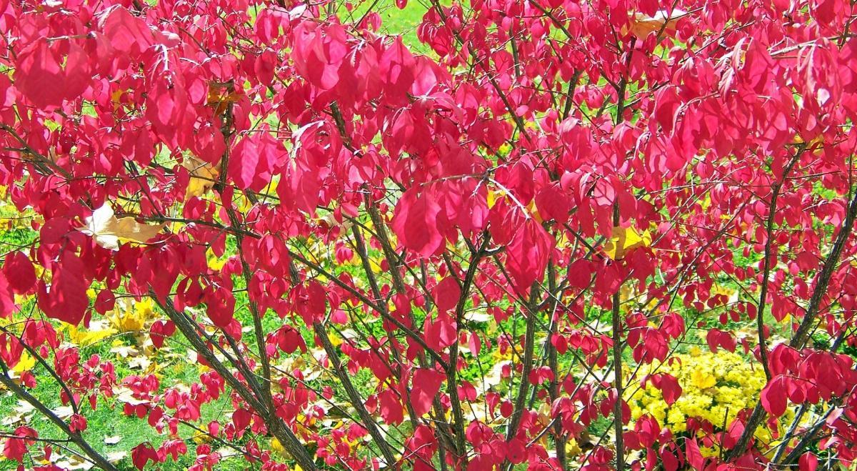 Guest Blogger - Plants 5