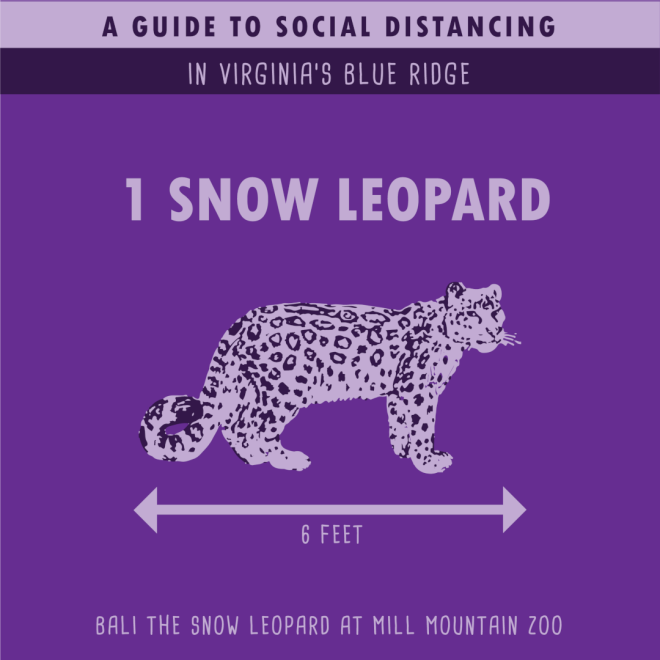 Mill Mountain Zoo - Snow Leopard - Social Distancing