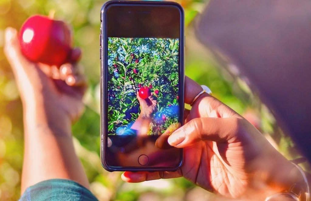 Apple Holler Shot