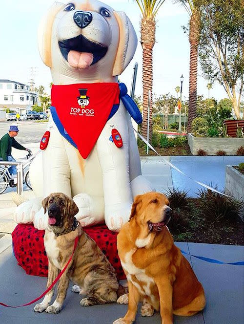 Get a free photo of your pup at Top Dog Barkery