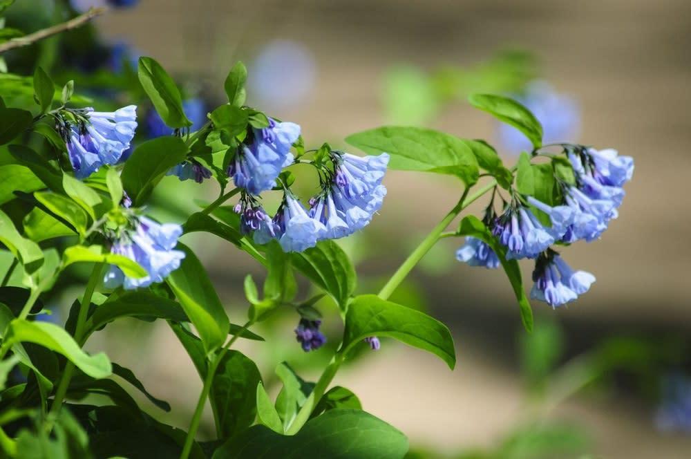 Riverbend Bluebells - April Blog Post