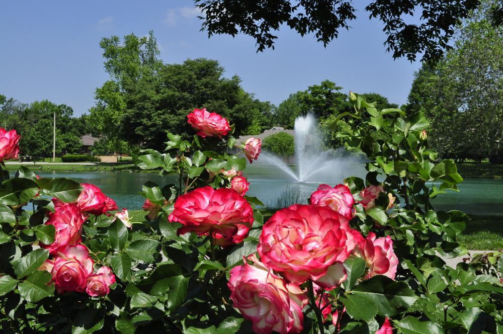 Lakeside Park flowers