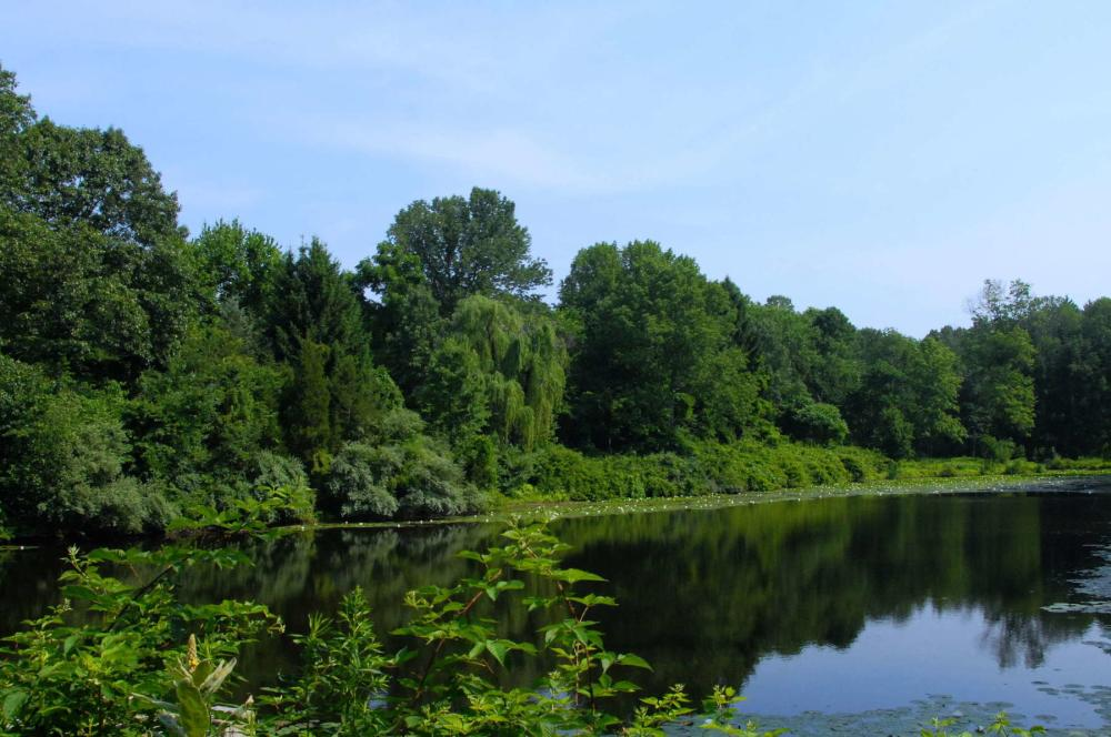 A view of Woodfield Reservation's wetlands, trees, and shrubs.