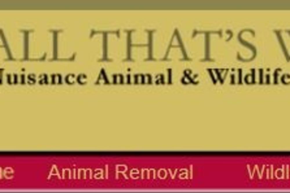 all_that's_wildlife.jpg