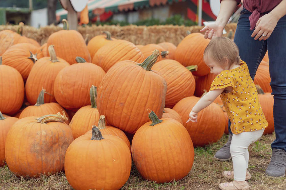 Burke Nursery and Garden Centre pumpkin patch