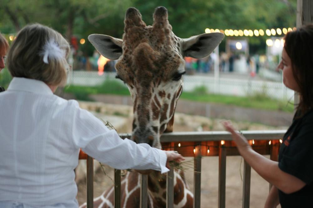 ZoobileeGiraffe