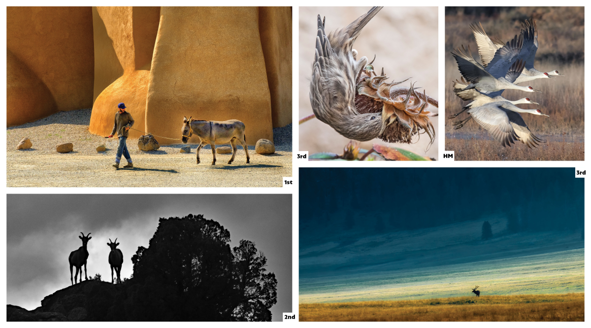 New Mexico Magazine Photo Contest: Animals Category