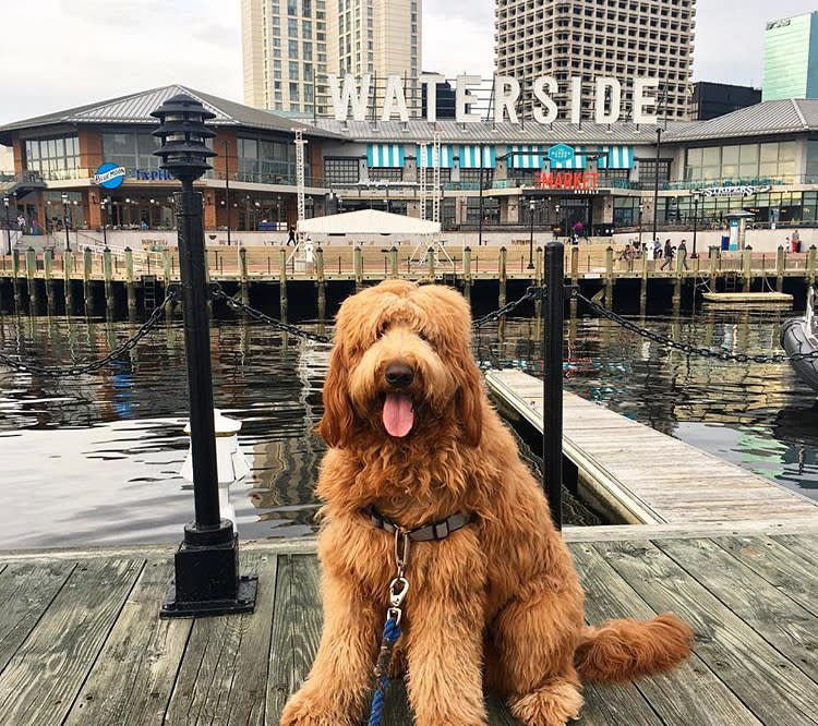 dog friendly - waterside