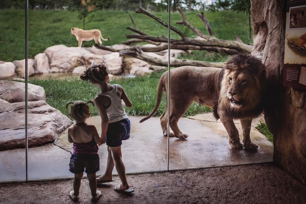 Fort Wayne Children's Zoo - Lion Exhibit with Children - Fort Wayne, Indiana