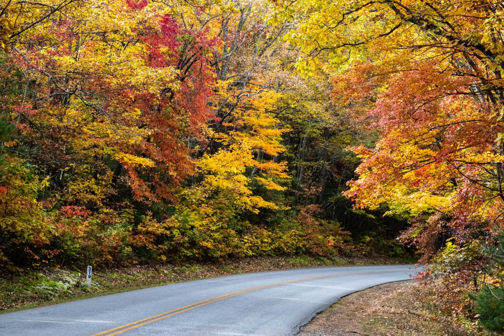 2018 Fall Color Blue Ridge Parkway Oct. 31