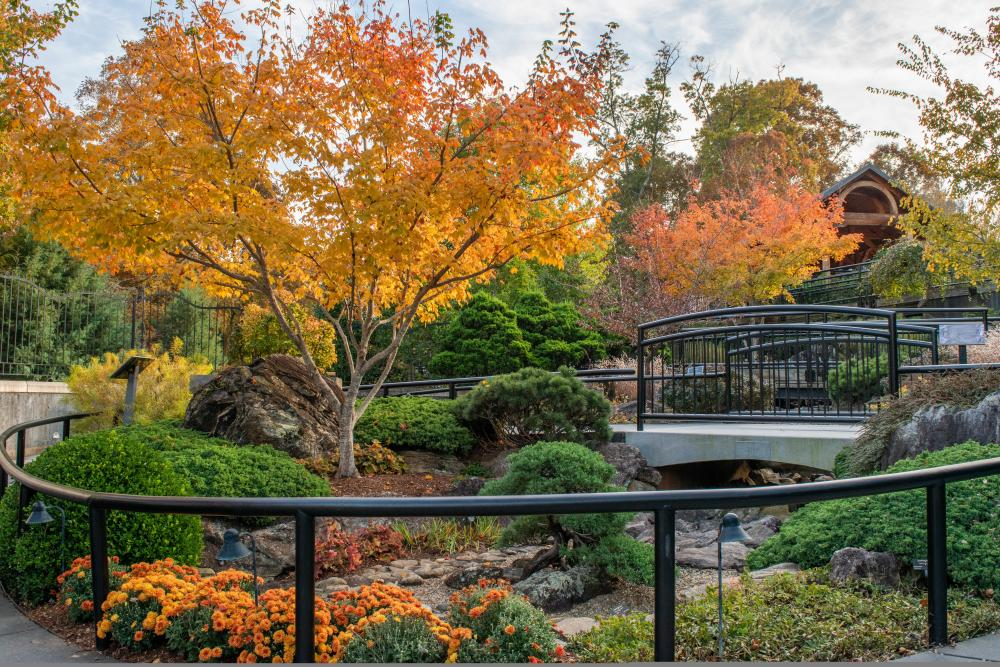 2018 Fall Color North Carolina Arboretum - October 31