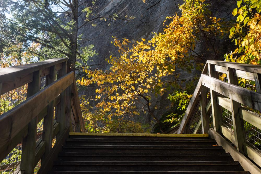 A golden tree awaits hikers at the top of the stairs at Chimney Rock State Park