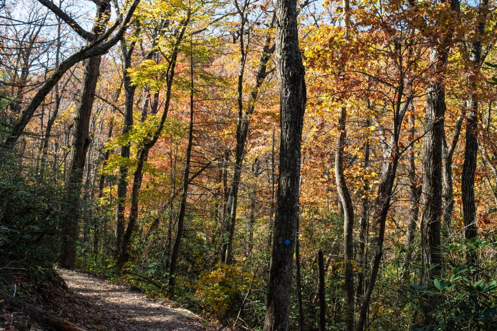 Afternoon sun highlights fall color along the Skyline Trail at Chimney Rock State Park