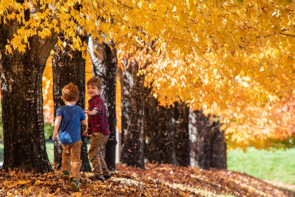 Little boys play under the fall leaves at the North Carolina Arboretum in Asheville, NC