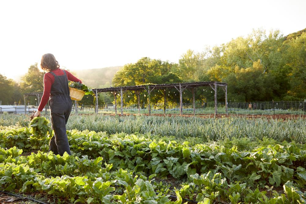 Woman walking through Farm at Miraval resort and spa in Austin texad