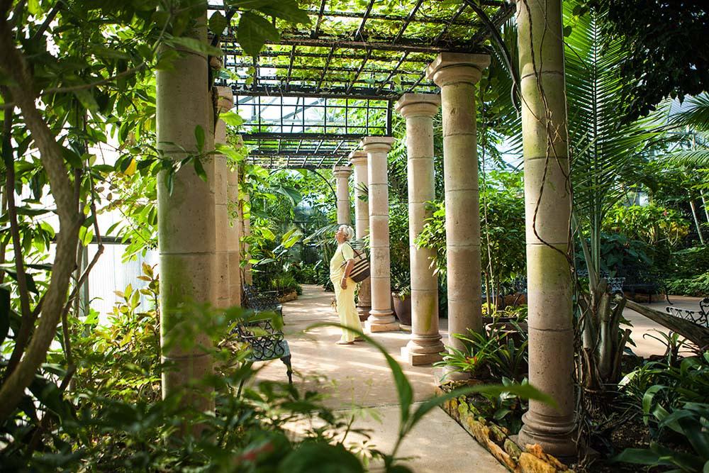 Beaumont Botanical Gardens canopy