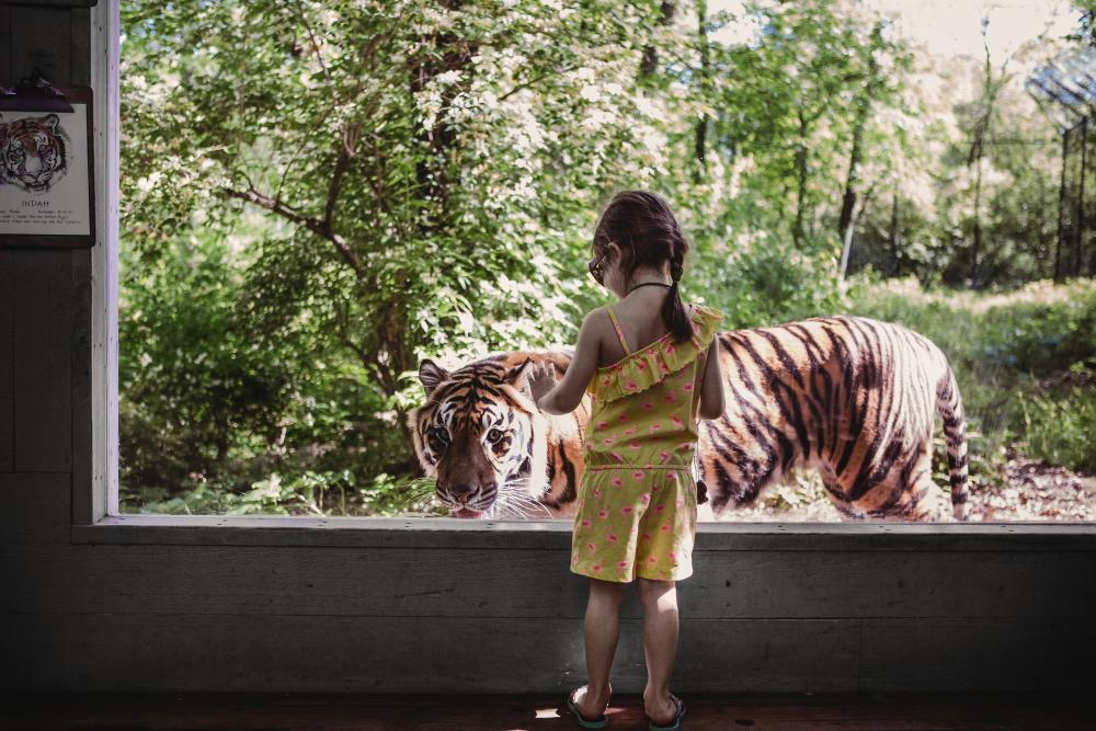 Girl at Zoo with Tiger