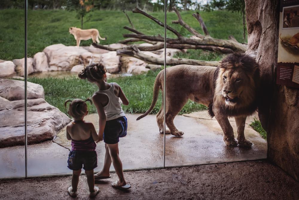 Fort Wayne Children's Zoo - Lion Exhibit with Children - Fort Wayne, Indiana