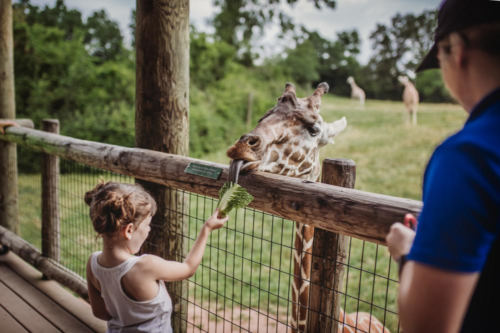 Fort Wayne Children's Zoo - Giraffe Encounter in Fort Wayne, Indiana
