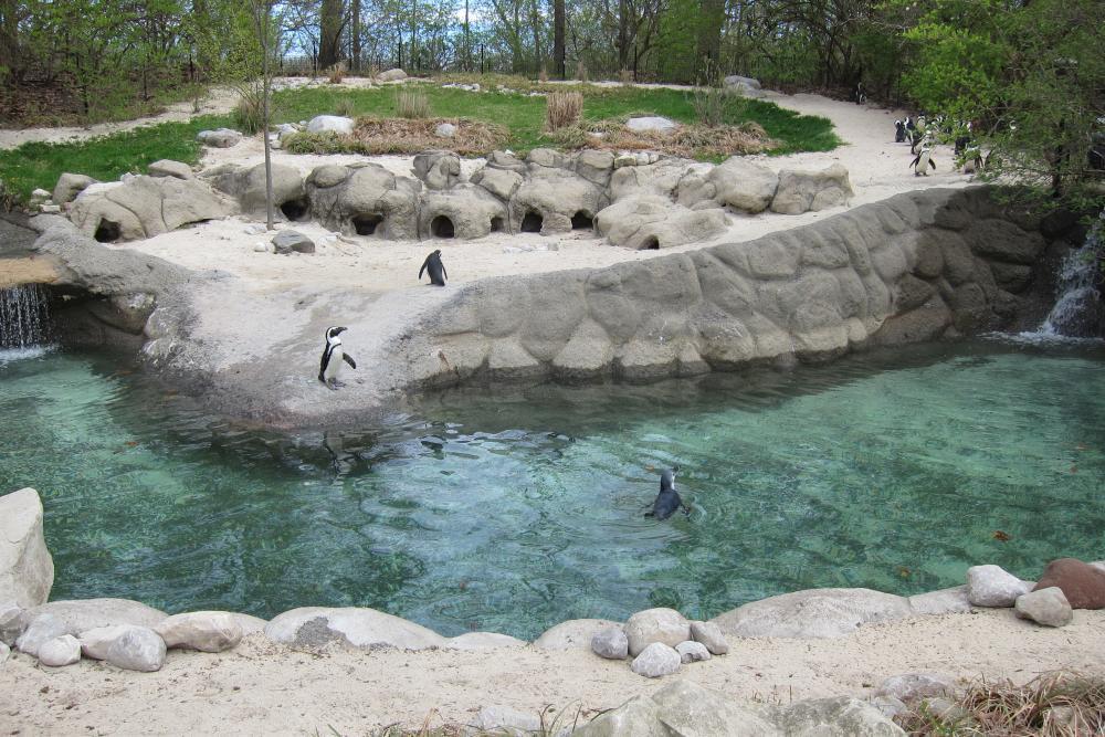 Fort Wayne Children's Zoo penguin Zuko
