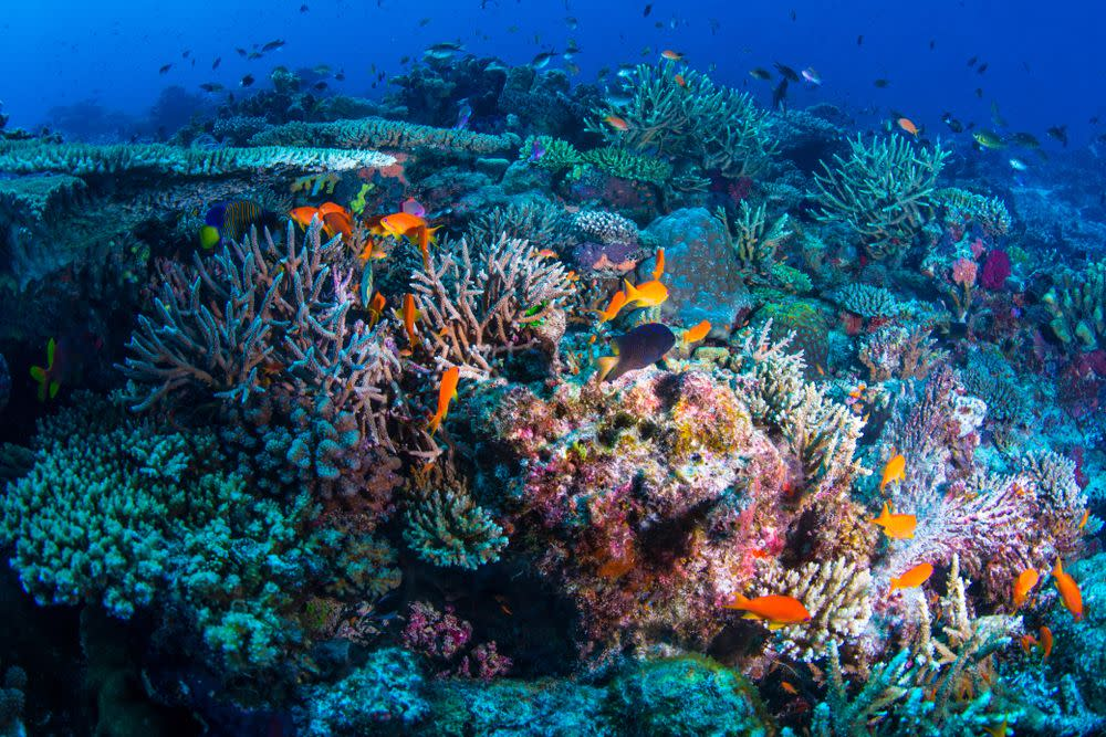 Puerto Morelos - Reef