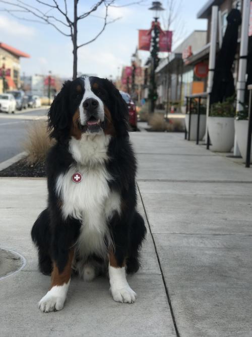 dog town center