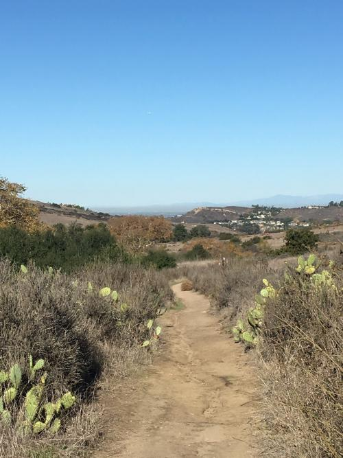 Bommer Canyon in Irvine is a site for beautiful outdoor yoga and hiking.
