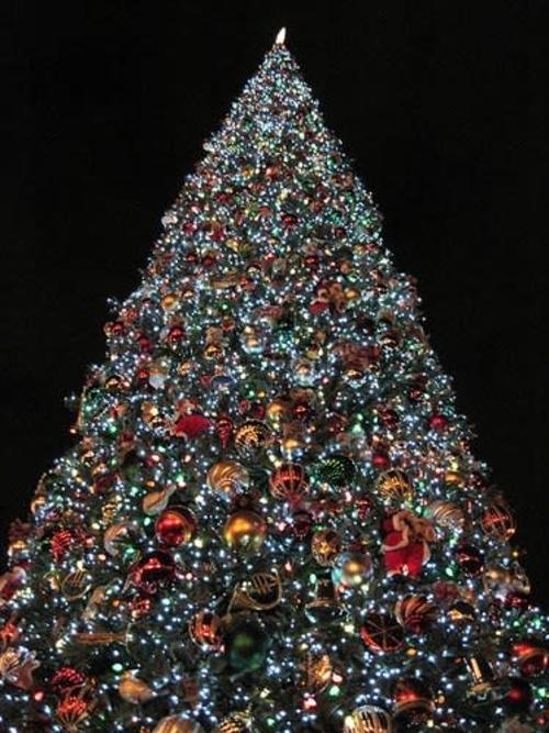 A very large christmas tree lit up looking at it from a low angle