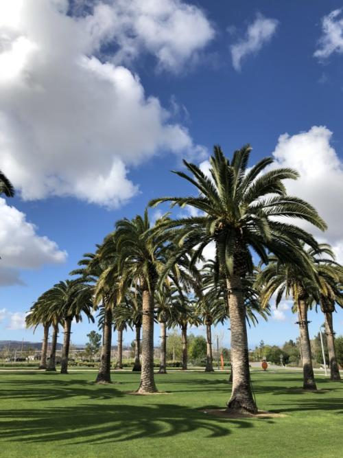 Palm Trees With Blue Sky And Green Grass