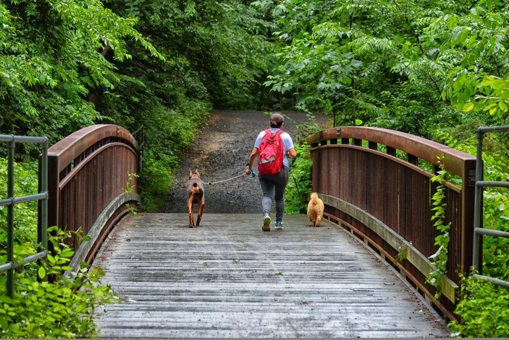Hiking - Dogs - Nature - Parks