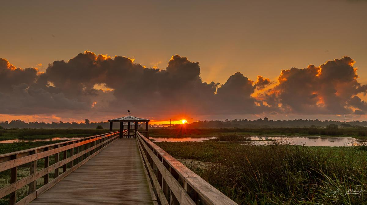 Cattail Marsh Boardwalk Sunrise