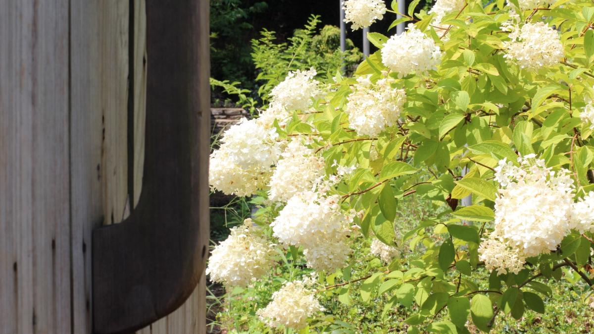 Knoxville Botanical Gardens