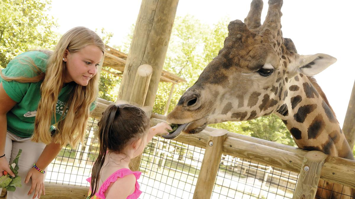 Little girl feeding a giraffe with the help of a zoo keeper at Zoo Knoxville