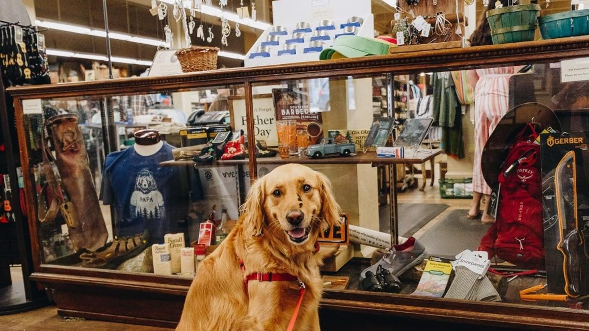 Golden Retriever Inside Mast General Store