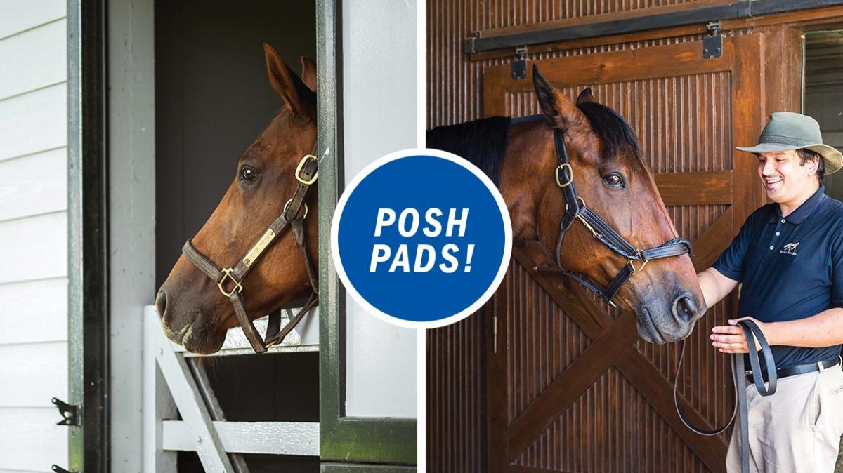 "Two panel image of two different horses looking out of their stables with the text ""Posh pads!"" in the center."