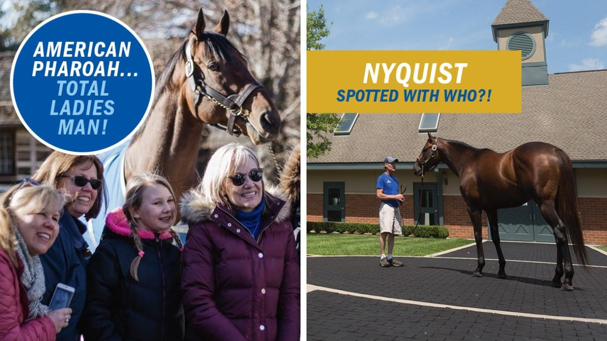 "A two panel image of people with horses. The left says ""American Pharoah... total ladies man!"" and the right says ""Nyquist spotted with who?!"""