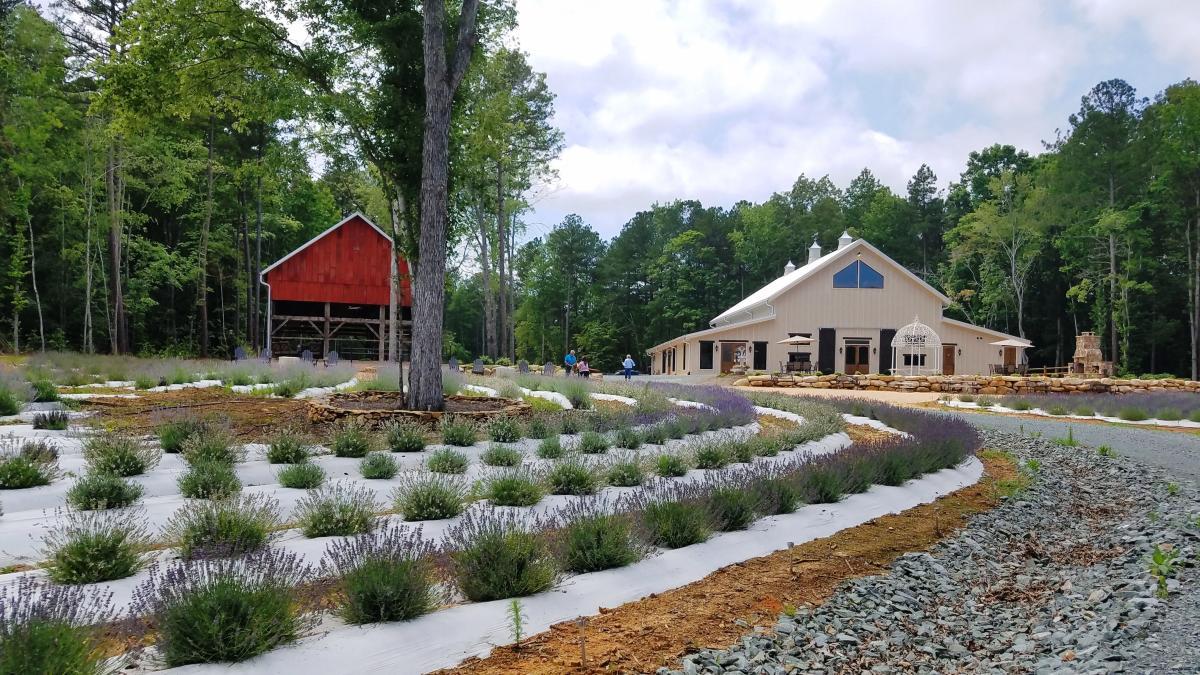Lavender Oak Farm