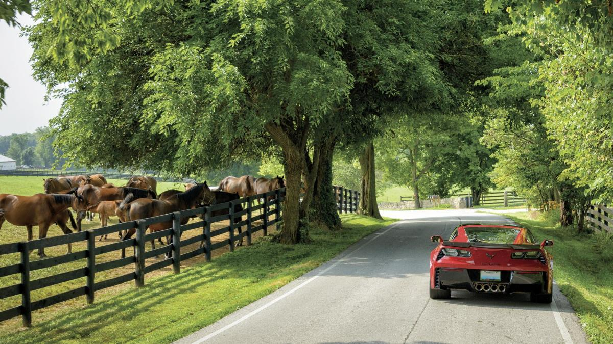 Country-Roads-in-Lexington-KY-smcrop