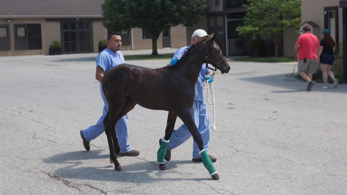 VisitLex_HorseFarmSelects_039