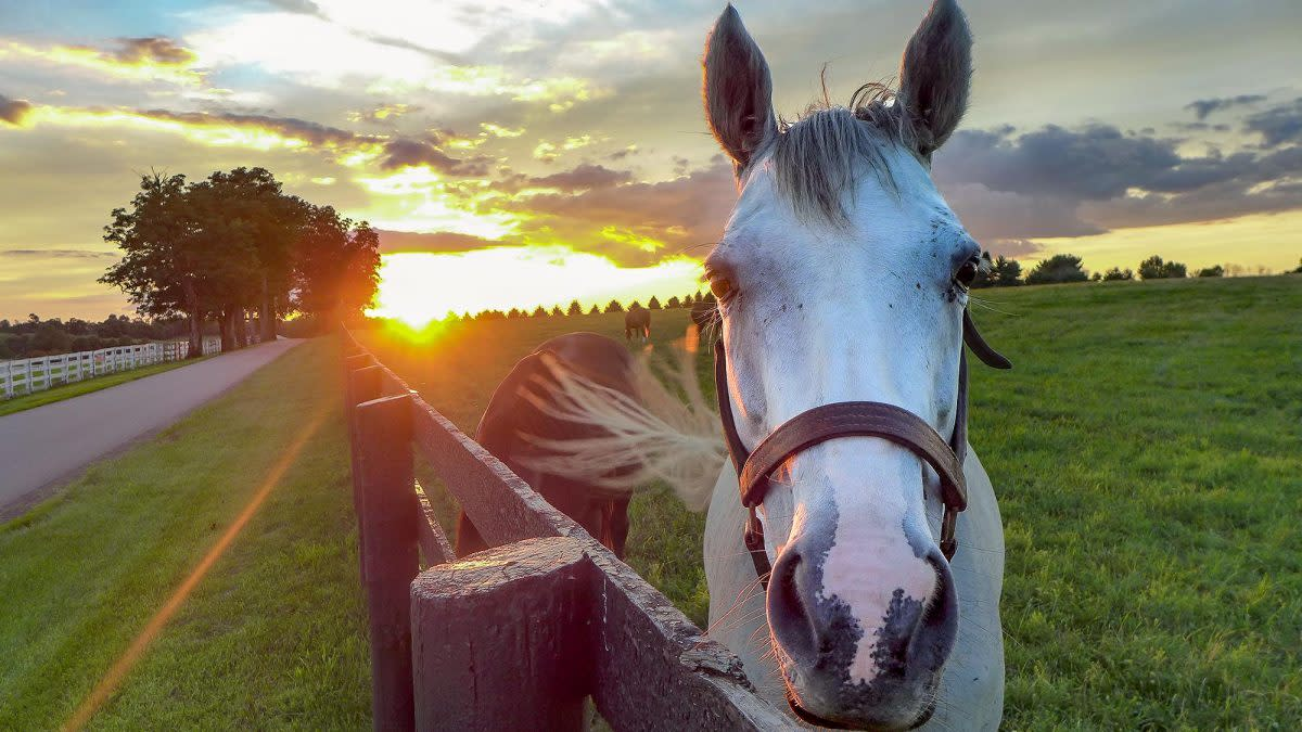 White horse next to fence with sunset in the background.