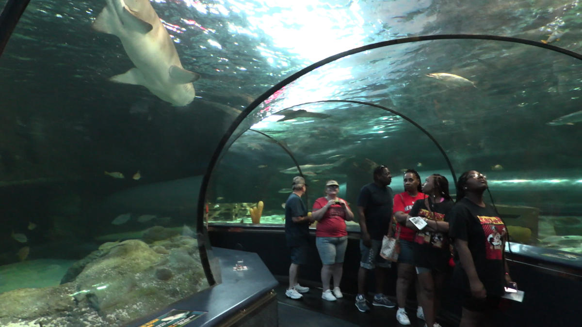 Visitors walking through the Ripley's Aquarium tunnel