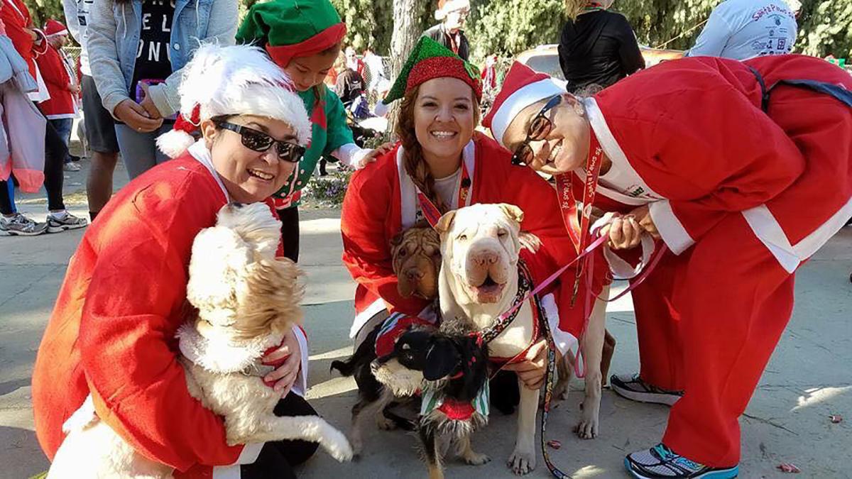 on the run santa paws web