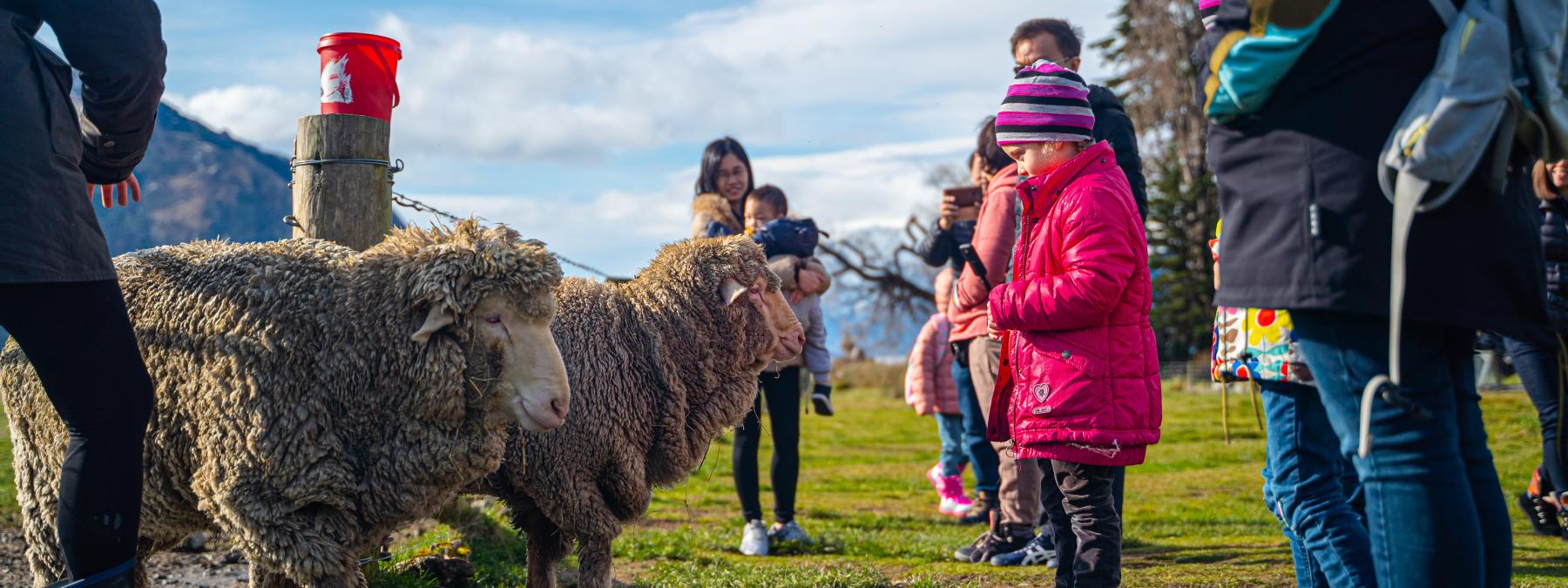 Southern Discoveries family day out farm tour