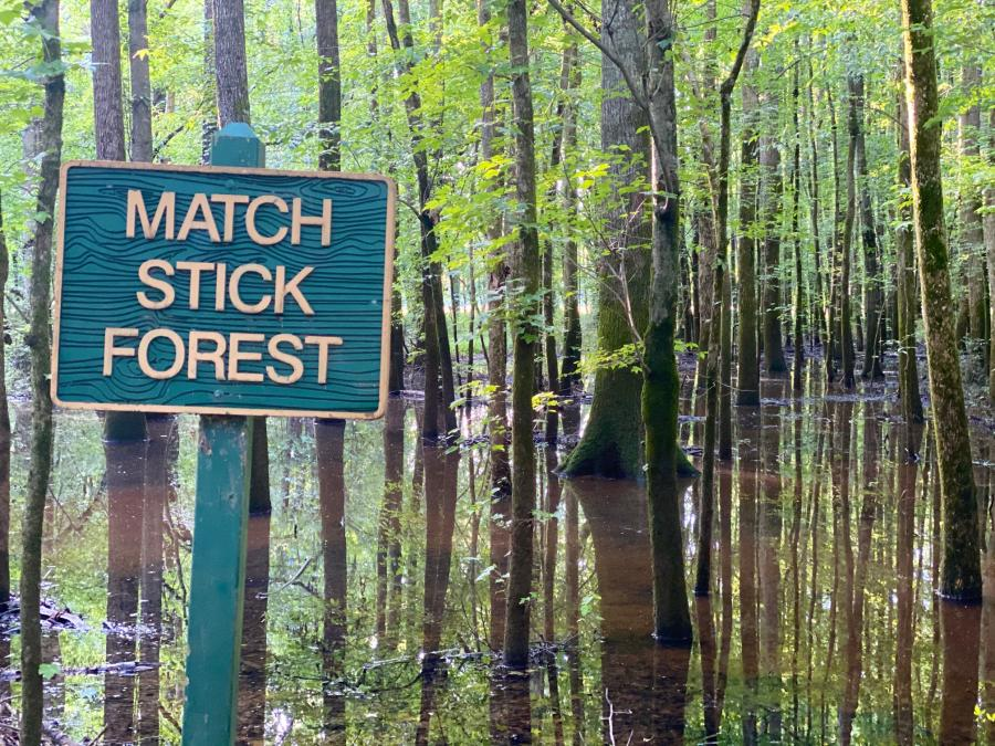 Hays Nature Preserve Match Stick Forrest