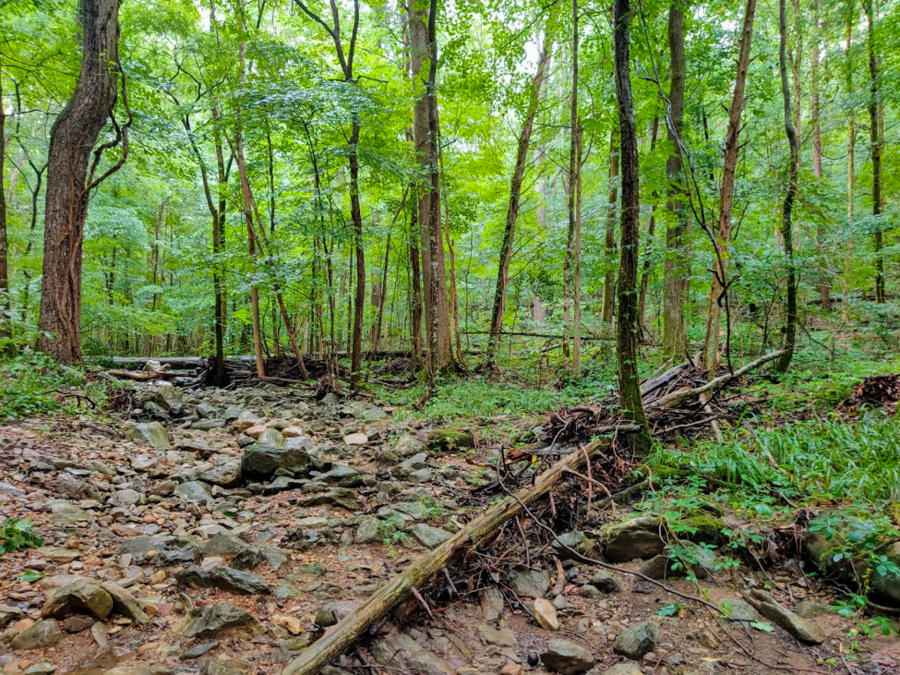 Green Forest And Creek Bed in Keel Mountain Nature Preserve