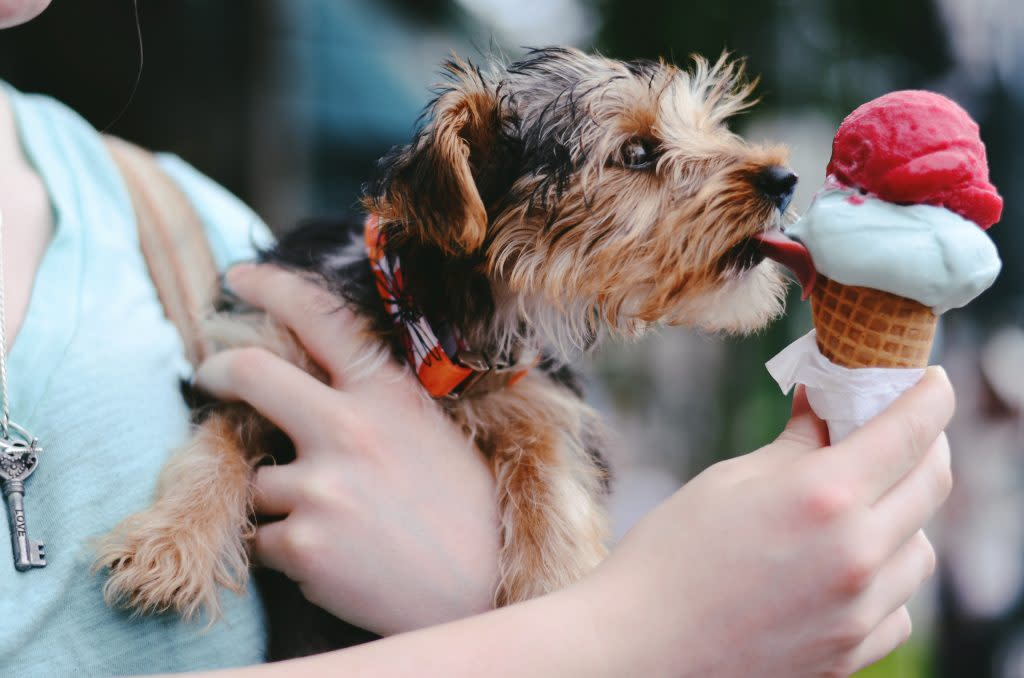 Dog Enjoying Ice Cream