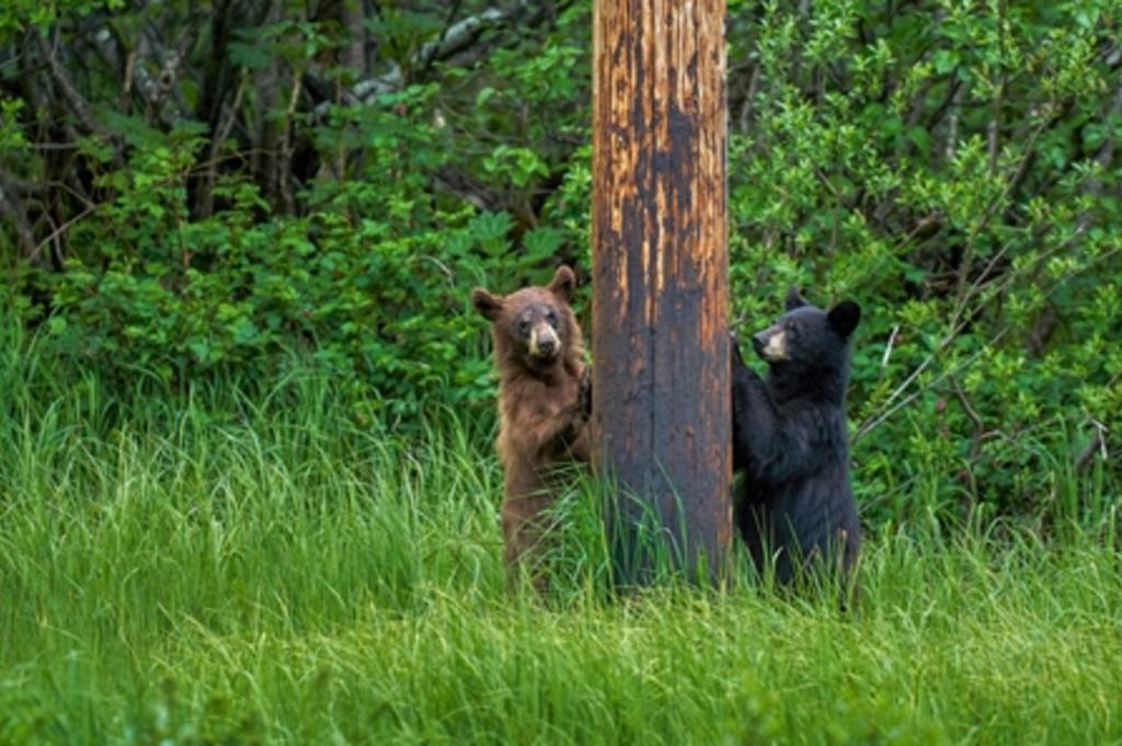 Pole dancing bears by Gary Minish (2).jpg