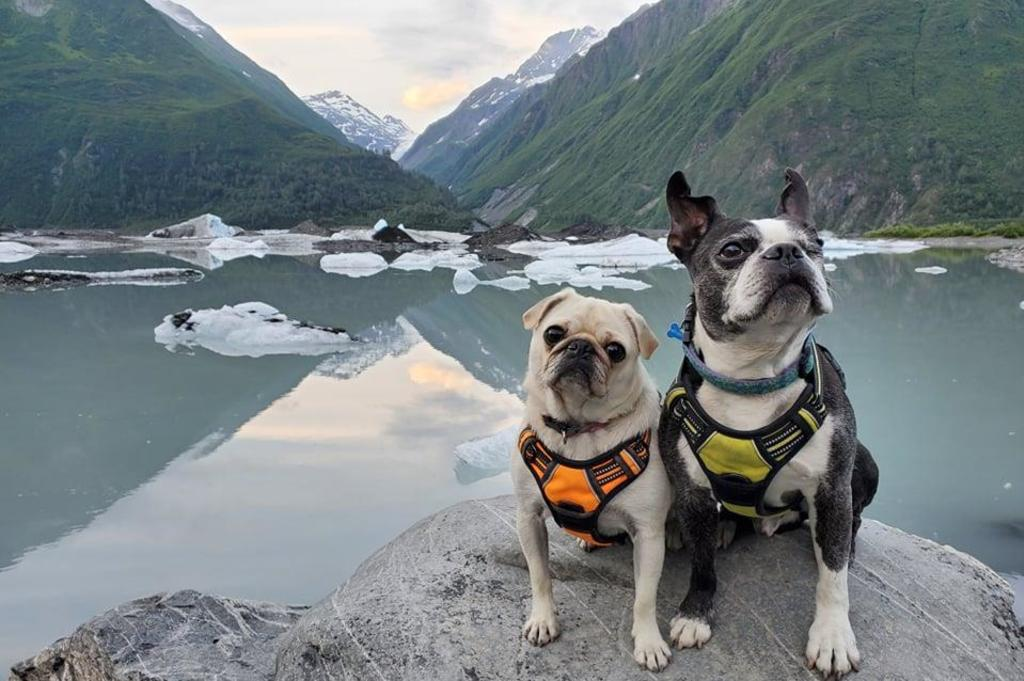 Dogs at Valdez Glacier Lake